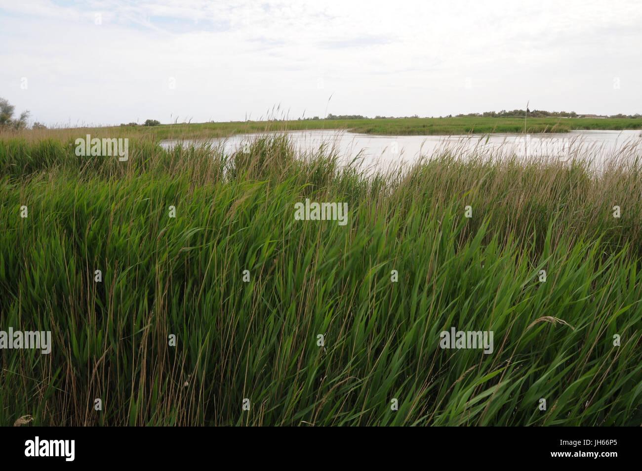 Río, la vegetación, la hierba, la vegetación, 2017, Saint Marie de la Mer, Camargue, Francia Imagen De Stock