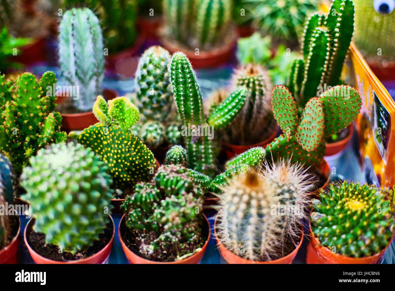 Cactus suculentas flores foto imagen de stock 148404738 for Curso cactus y suculentas