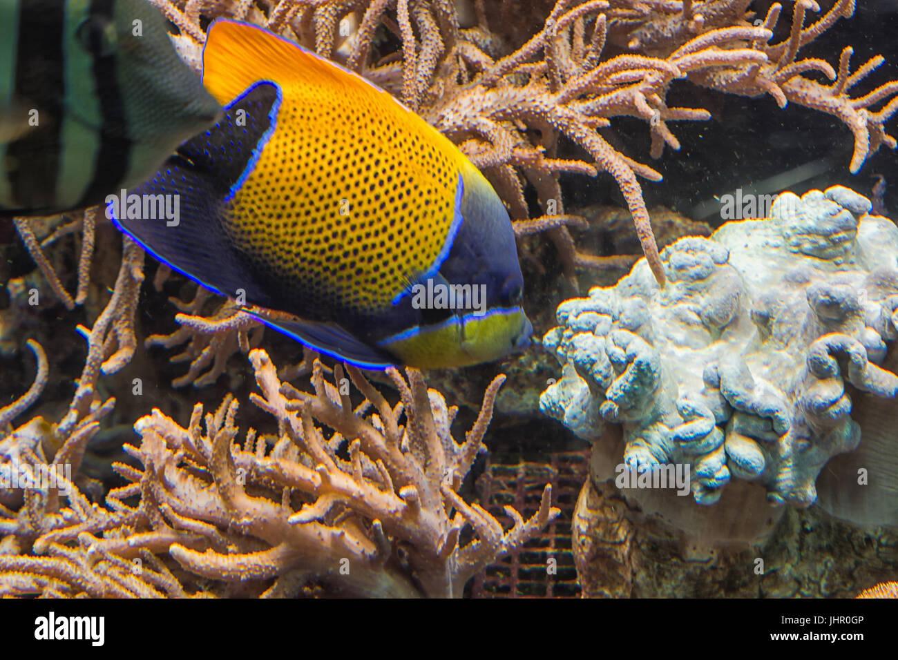 Filmación subacuática, en un acuario con peces y corales anémona de mar. Foto de stock
