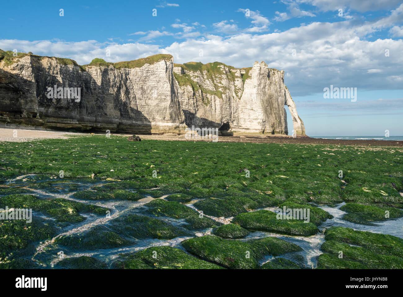 Porte d'aval con marea baja y algas en la Playa Etretat, Normandía, Francia, Europa Foto de stock