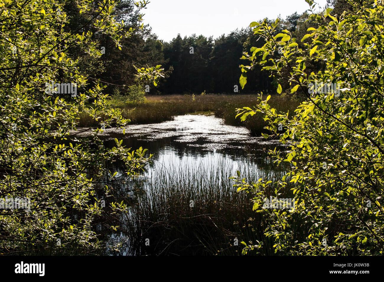 Árbol-ascendía moor estanque en la deslumbrante luz posterior, baumumstandener moorteich gleissenden gegenlicht im Foto de stock