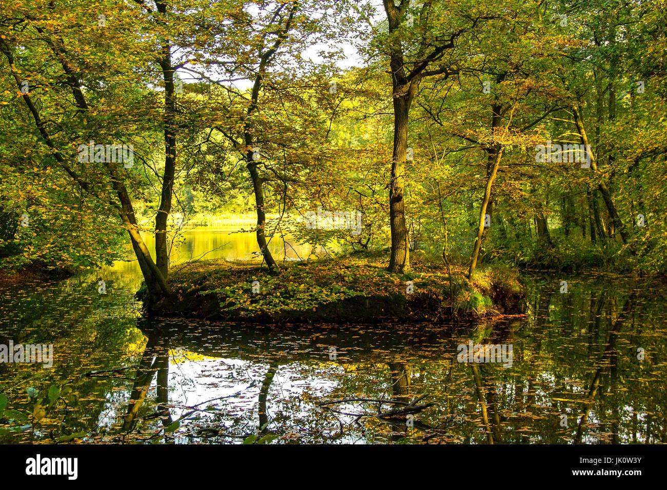 Estanque en medio de un brillante beech romper madera con comienzo otoño de coloración, weiher inmitten eines lichten buchenbruchwalds mit beginnender herbstf Foto de stock