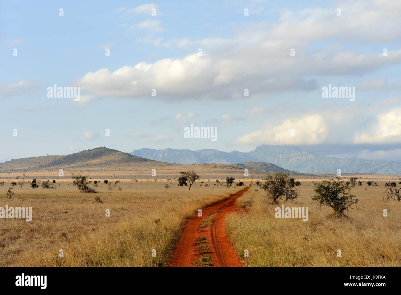 Paisaje de sabana en el parque nacional en Kenya, Africa. Imagen De Stock