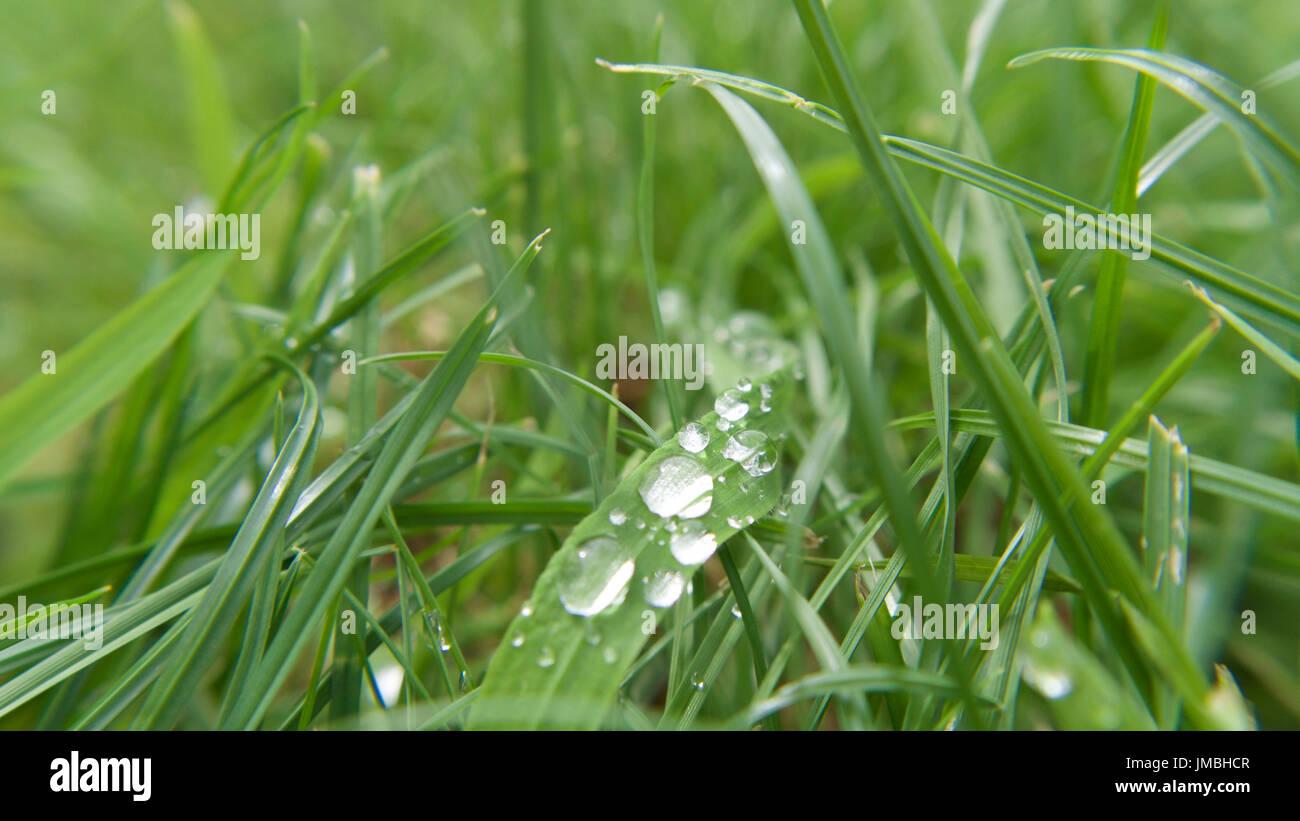 La hierba húmeda de secado al sol, macro. Foto de stock
