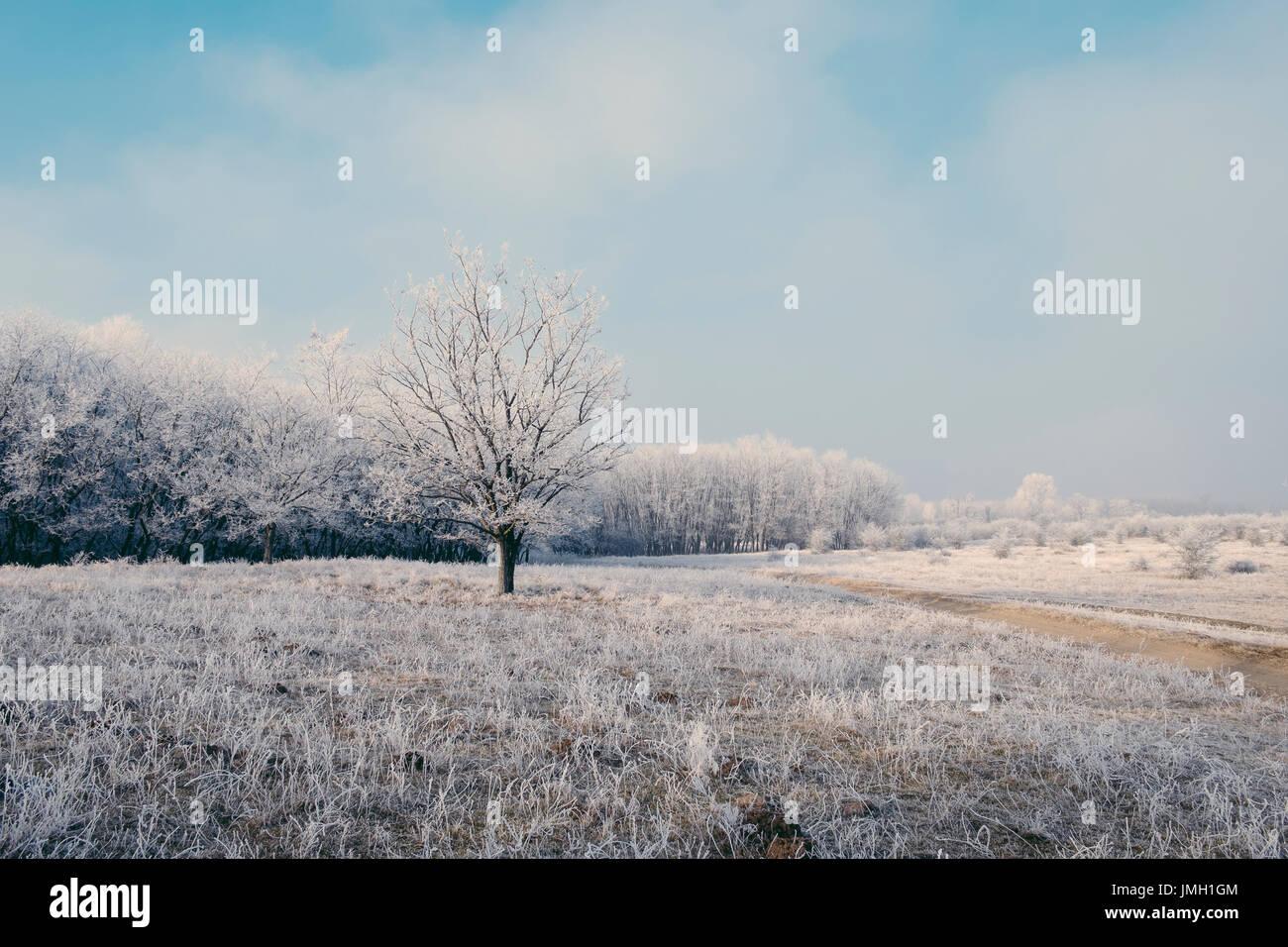 Bosque de invierno Imagen De Stock