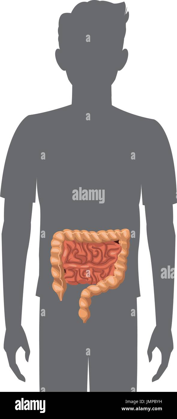 Large Bowel Imágenes De Stock & Large Bowel Fotos De Stock - Alamy