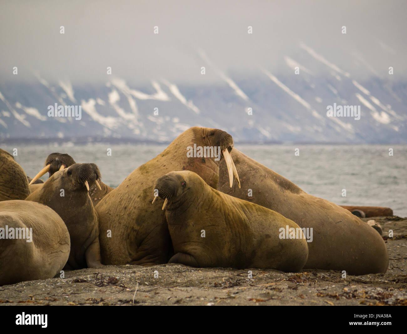 Digesting Imágenes De Stock & Digesting Fotos De Stock - Alamy