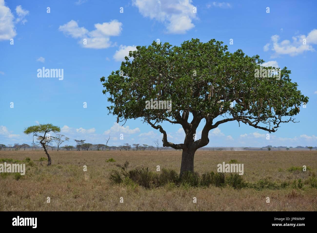 Paisaje de safari africano en Tanzania Imagen De Stock
