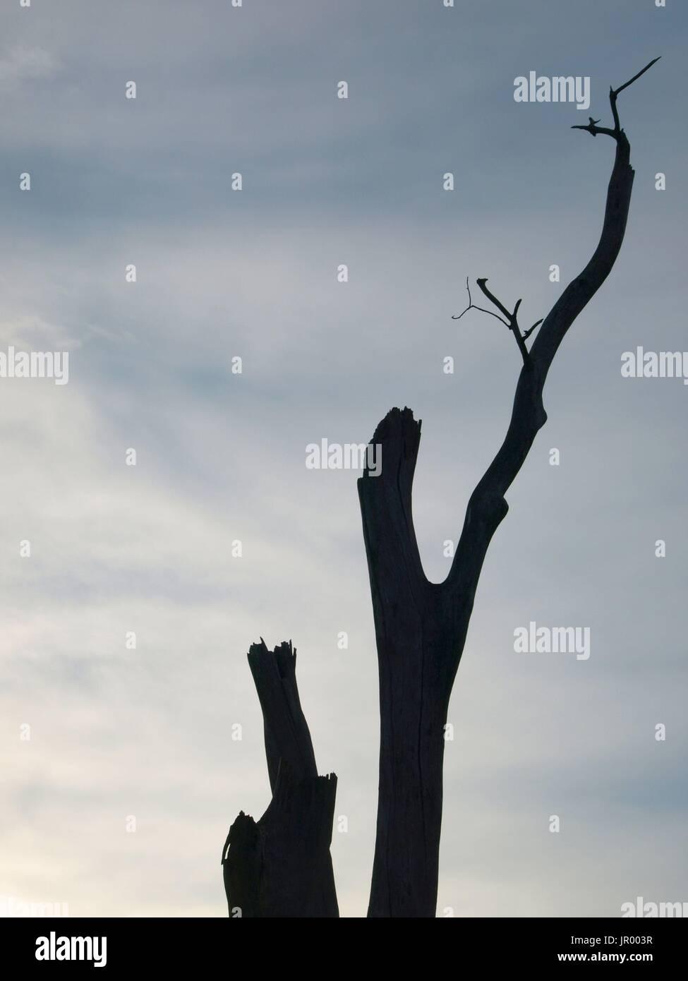 Árbol Muerto extremidades contra el cielo azul claro Imagen De Stock