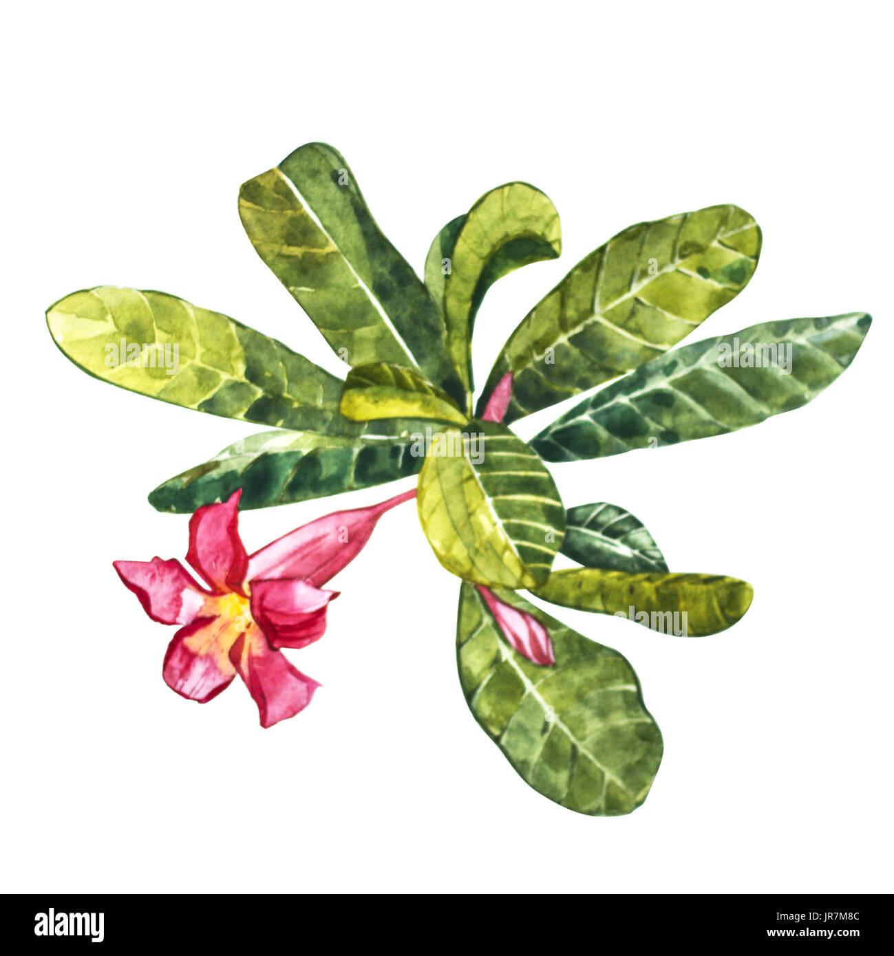 Flores Tropicales Aislado Sobre Fondo Blanco Objeto De Dibujo De