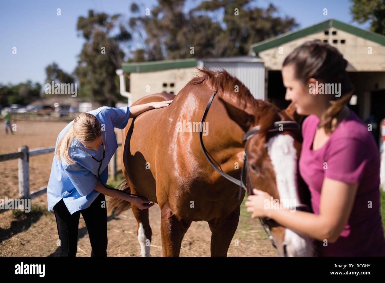 Vet con mujer comprobando caballo estando de pie en el campo durante el día soleado Foto de stock