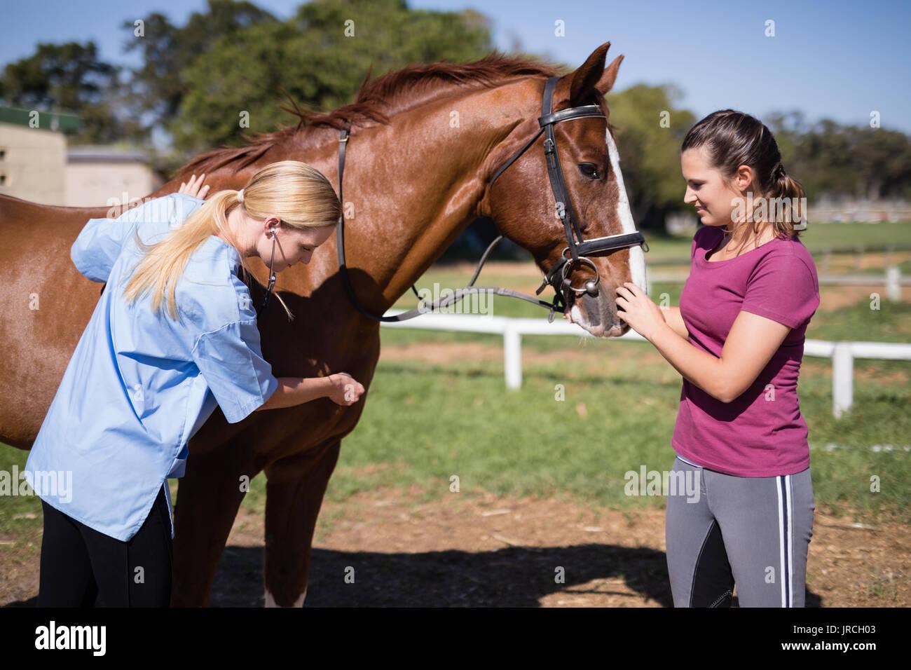 Mujer con mujer vet comprobar estando de pie en el campo de caballos Foto de stock