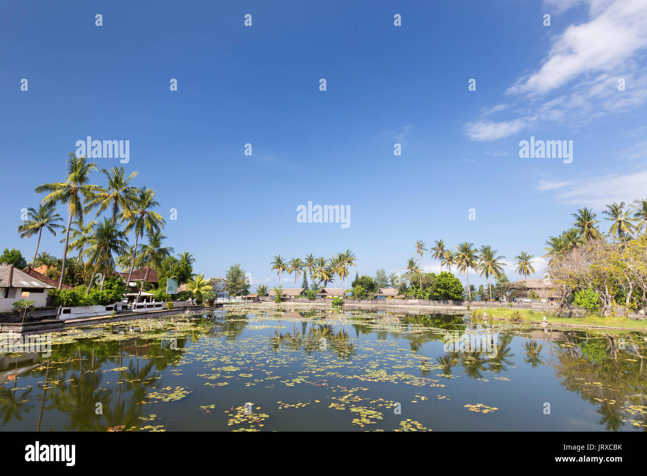 Lotus nenúfares que crecen en la laguna de Candidasa, Bali, Indonesia Imagen De Stock