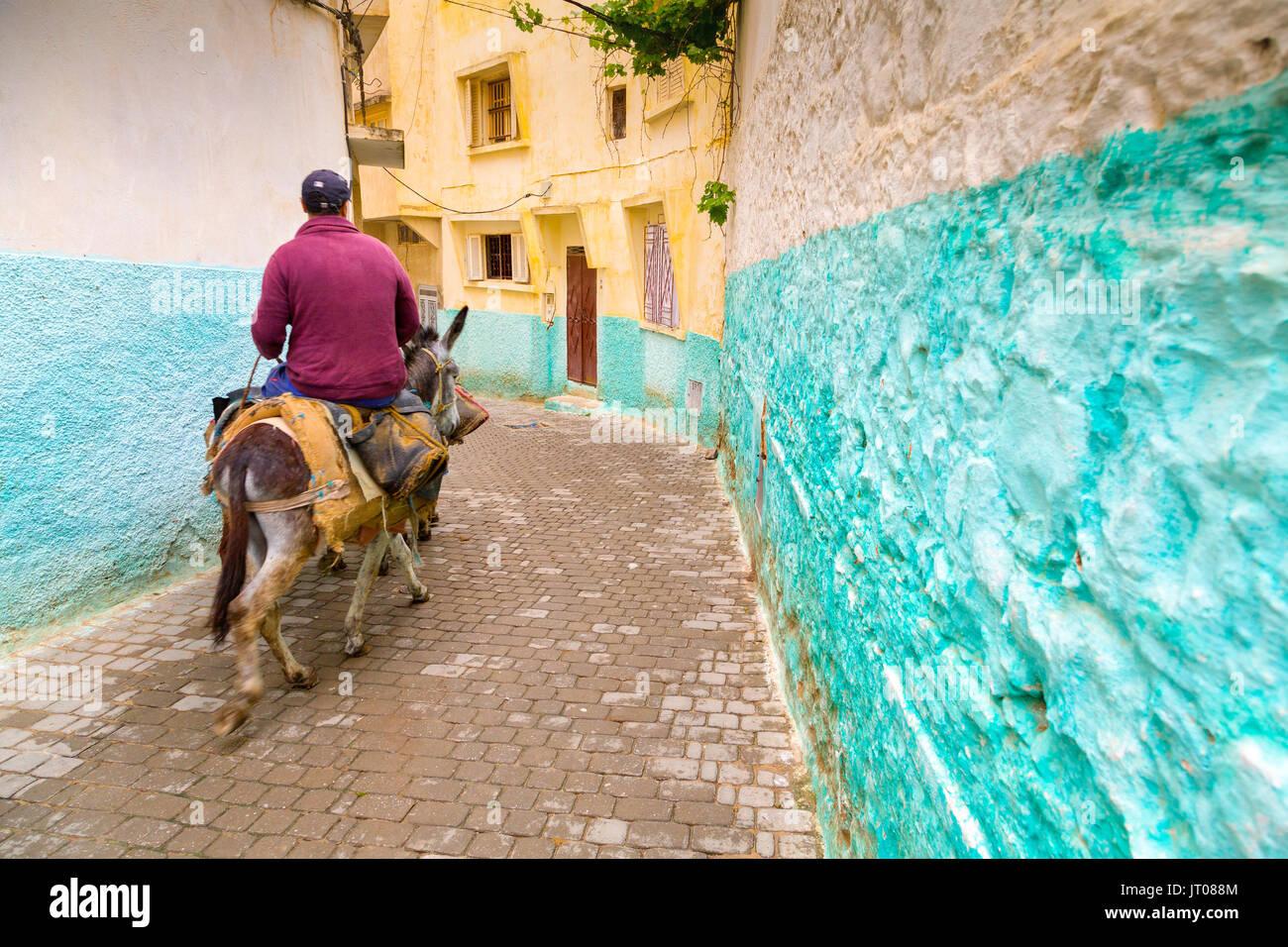 Hombre montado en un asno, La vida en la calle escena, Moulay Idriss. Marruecos, Magreb, África del Norte Foto de stock