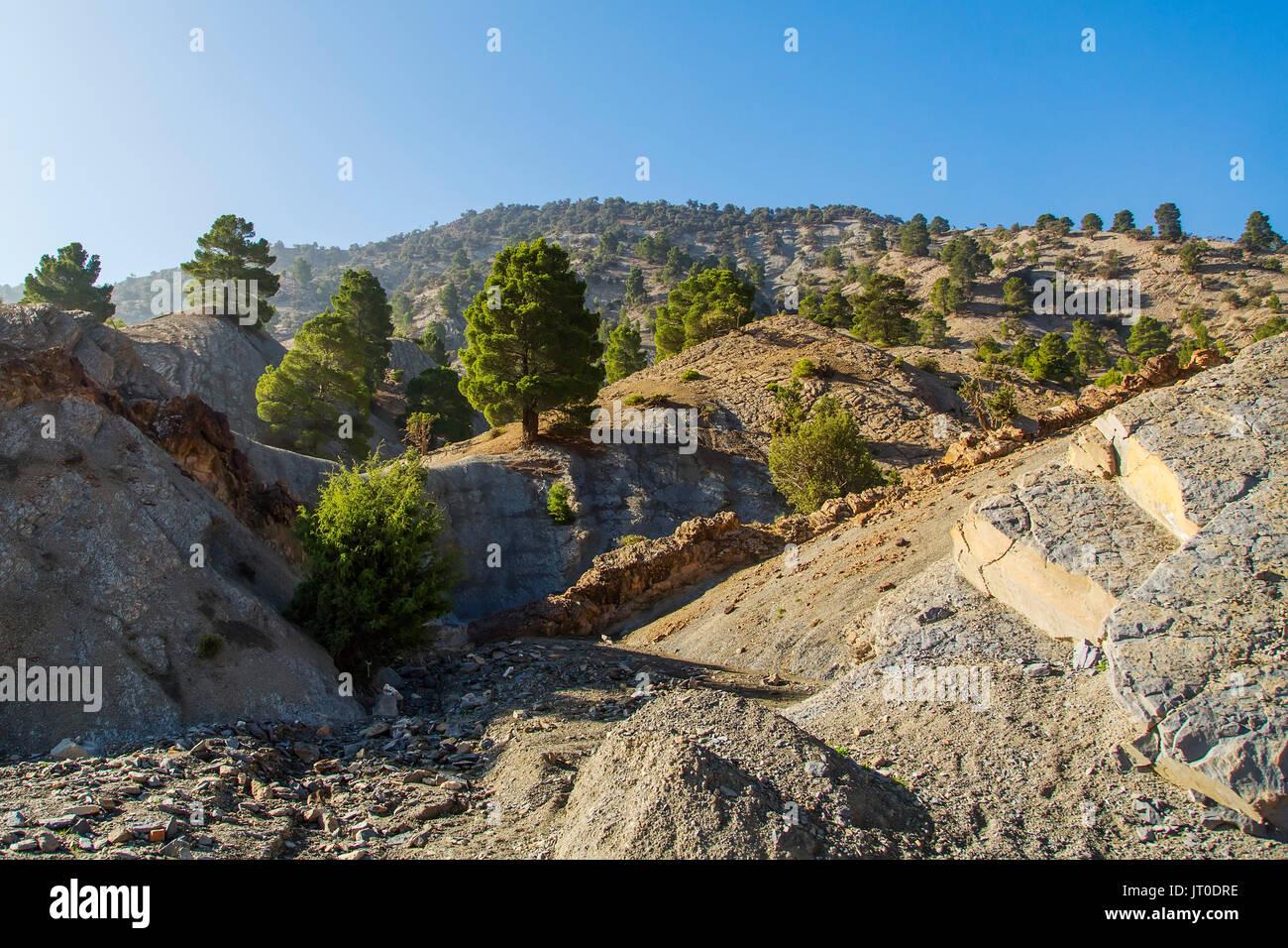 Pino y paisaje de montaña. El Alto Atlas. Marruecos, Magreb, África del Norte Foto de stock