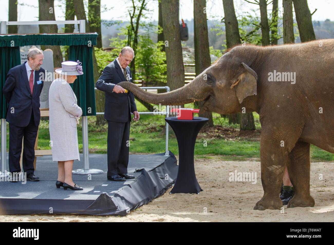 Su Majestad la Reina Isabel II y Su Alteza Real el Príncipe Felipe, alimentar a Donna, un elefante asiático plátanos, ZSL Whipsnade Zoo Imagen De Stock