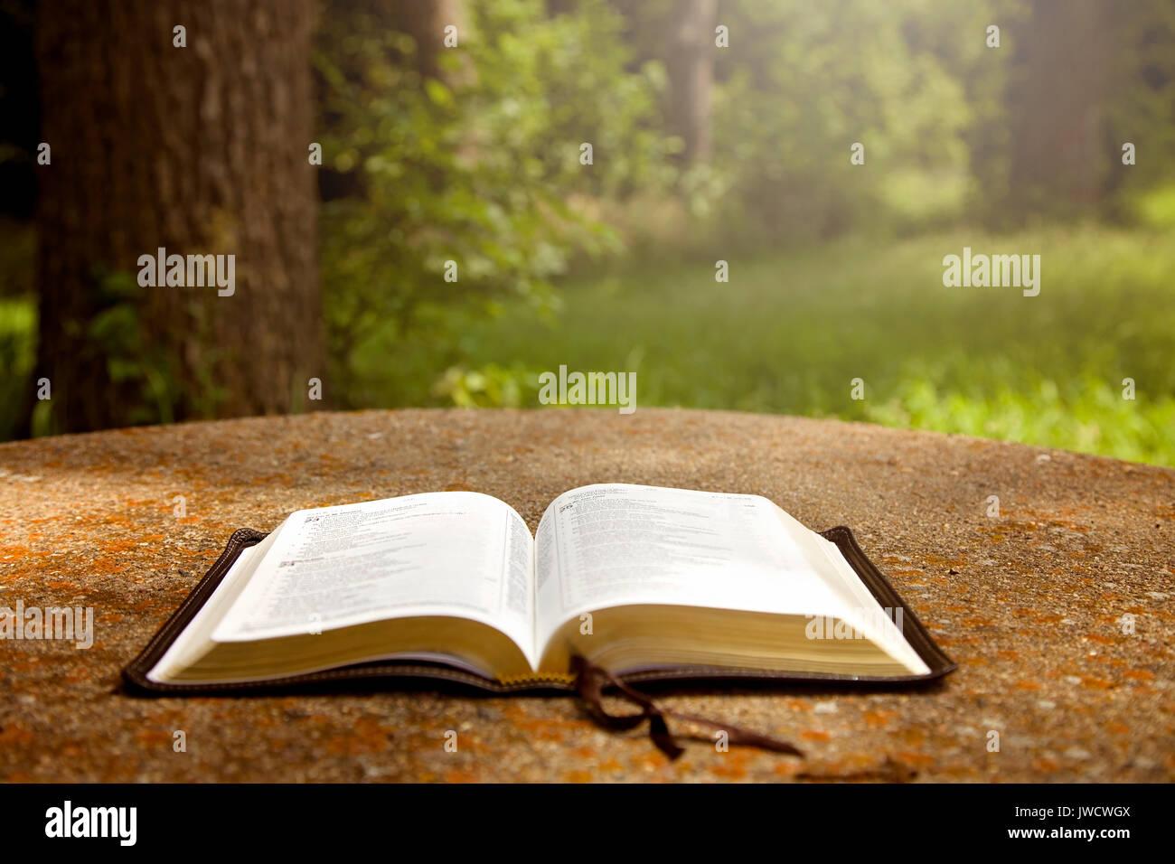 Una Biblia Abierta Sobre Una Tabla En Un Jardin Verde Fotografia De Stock Alamy
