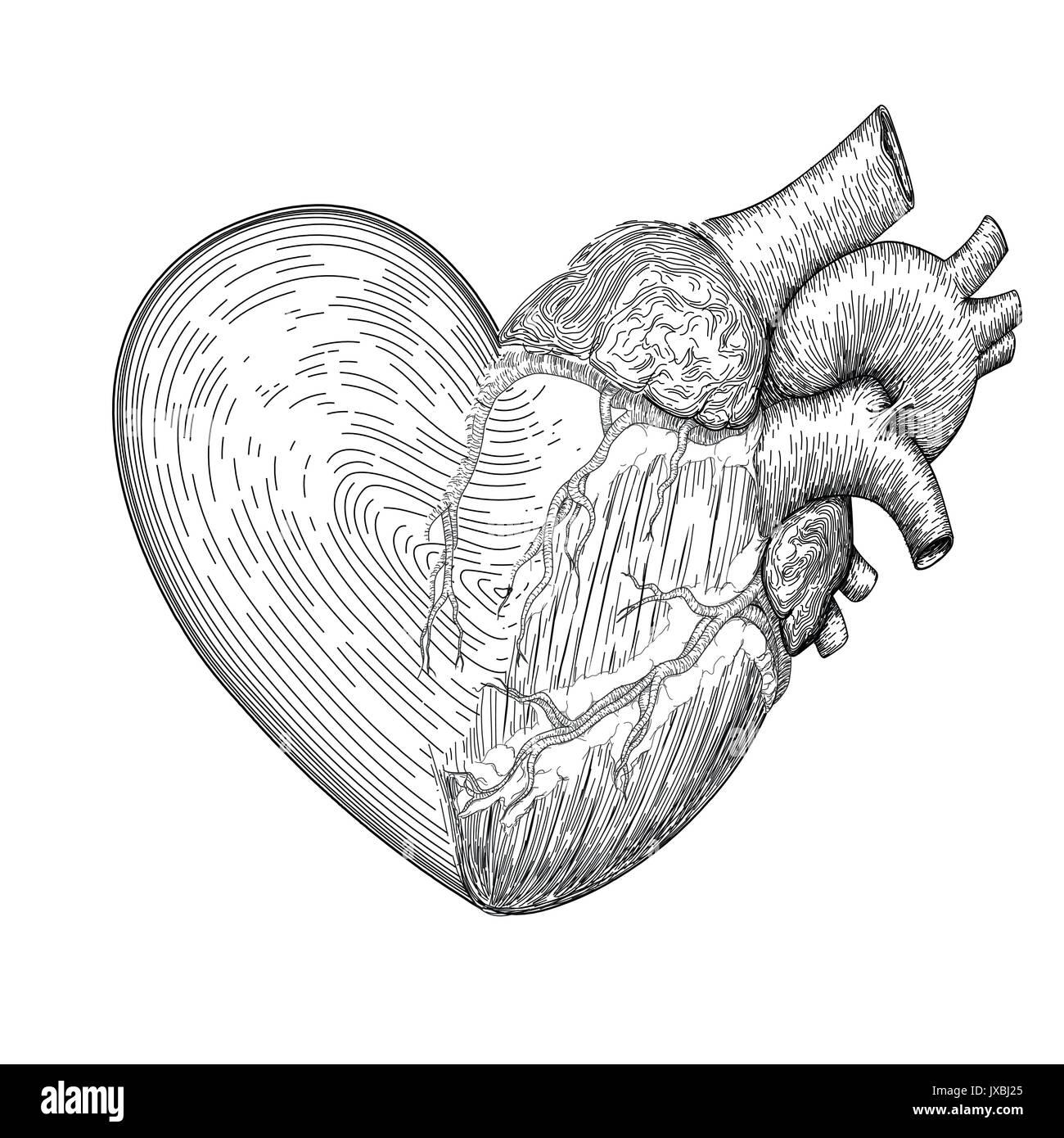 Símbolo De Corazón Con Corazón Humano Real Media Juntos Dibujadas A