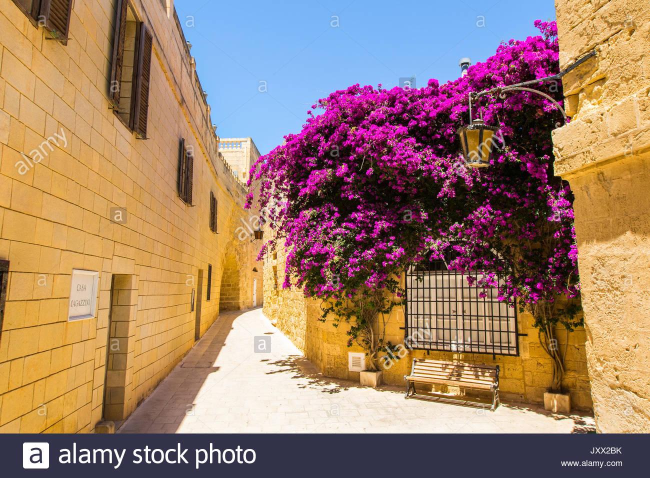 Banco bajo una floración púrpura bougainvillea en una callejuela de Mdina, malta Imagen De Stock