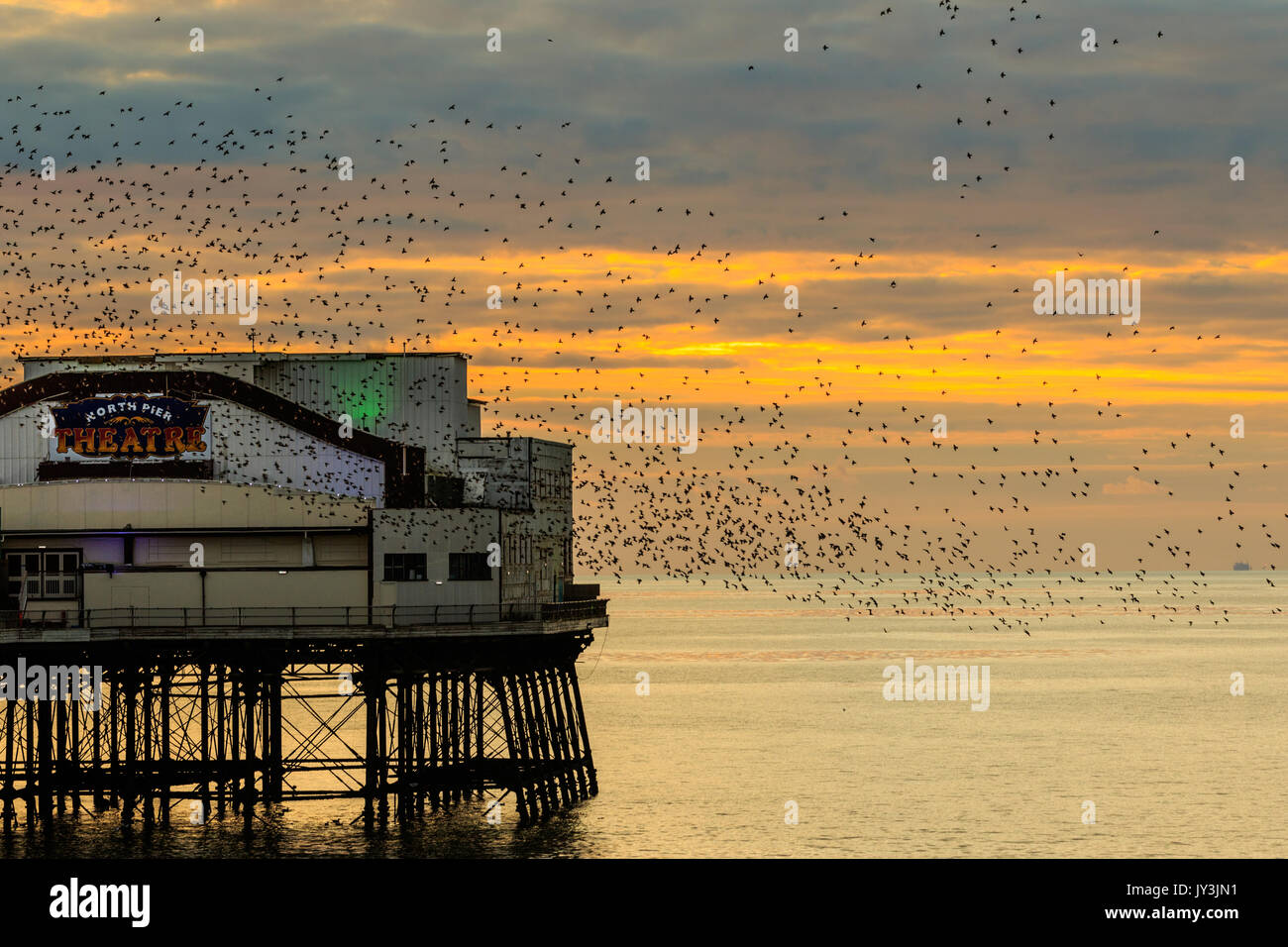 Starling murmuration en Blackpool North Pier uk Imagen De Stock