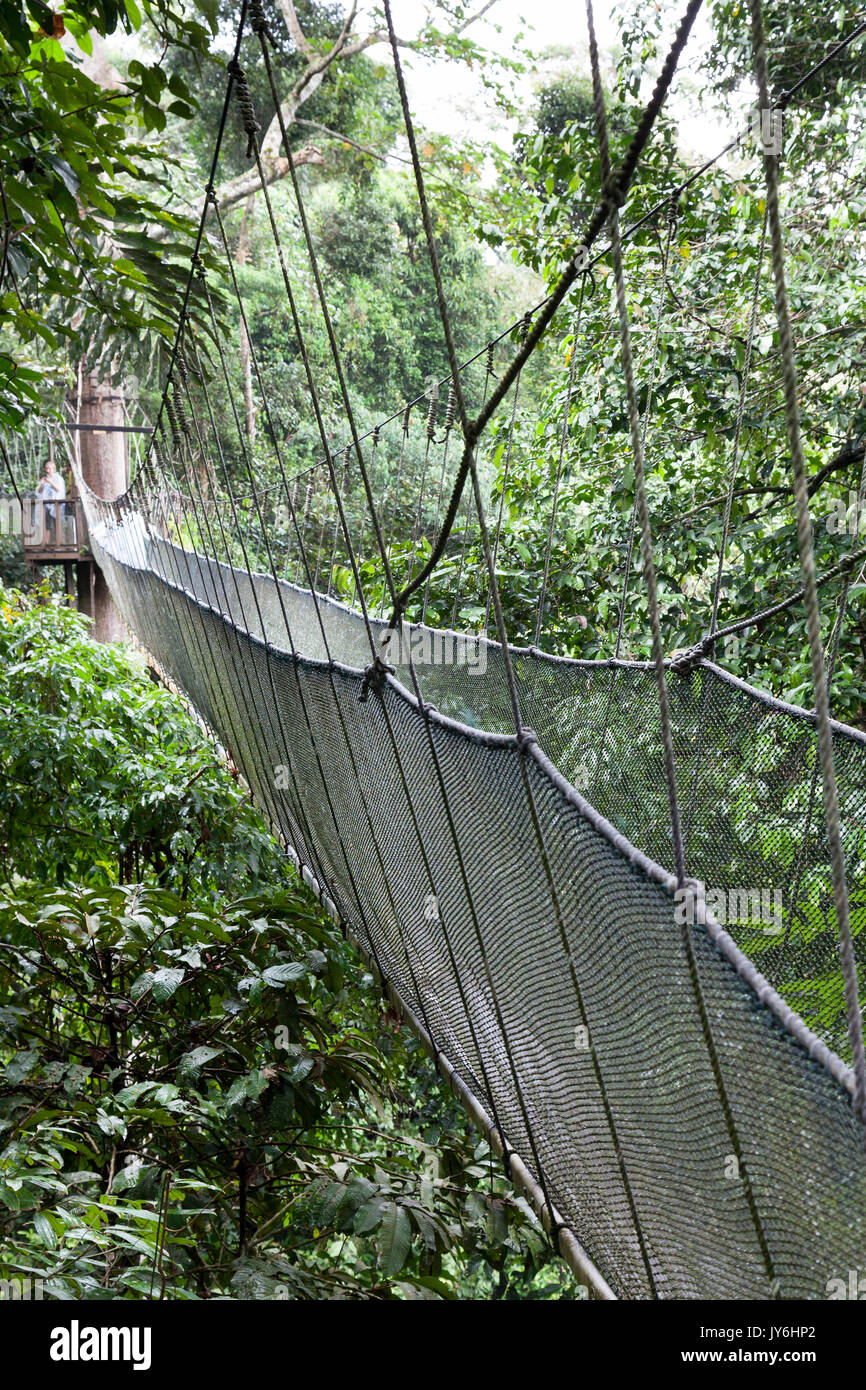 Canopy Walk en Parque de Kinabalu, costa occidental de Sabah, Borneo, Malasia. Foto de stock