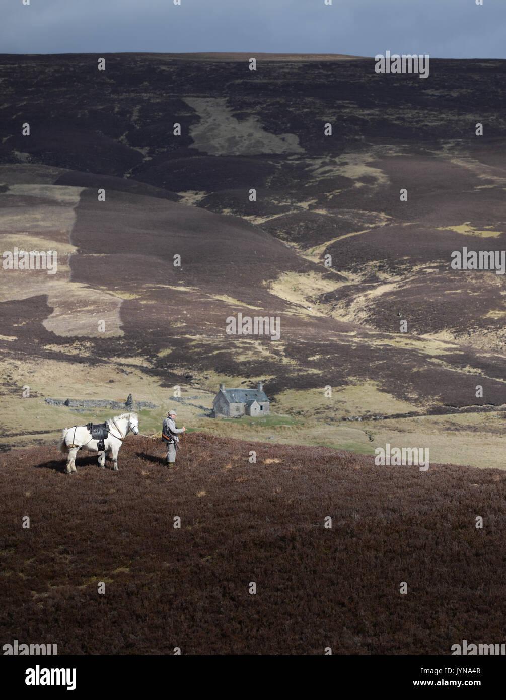 Venado acecho en el Blair Atholl estate en Escocia Foto de stock