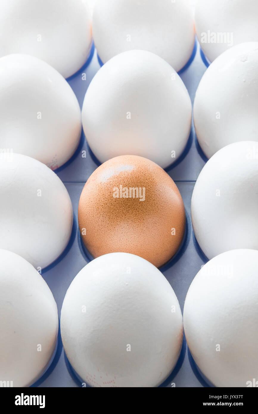Un huevo marrón en el medio de los huevos blancos Imagen De Stock