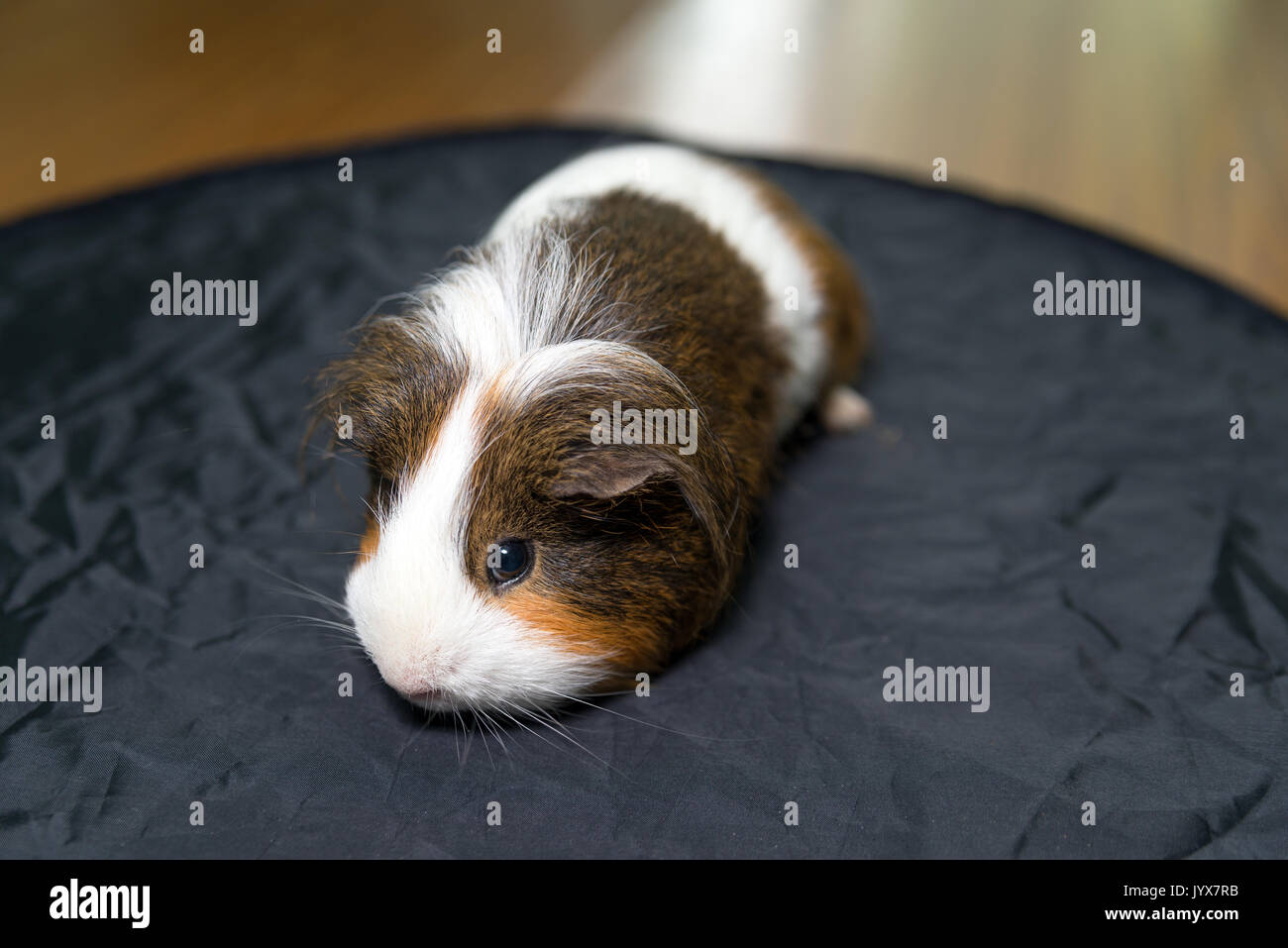 Animal Pig Black And White Imágenes De Stock & Animal Pig Black And ...