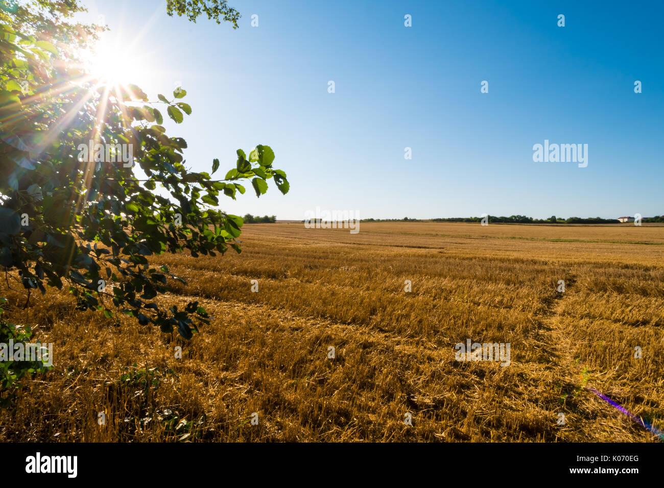 Brown otoño de campo con el árbol en el lado izquierdo con rayos de sol en las ramas. La luz solar directa, limpio cielo azul, sin nubes, el horizonte lejano. Imagen De Stock