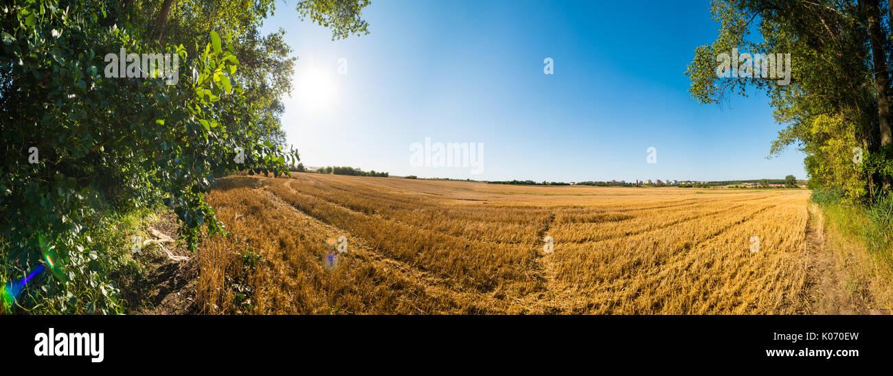Vista panorámica de marrón otoño de campo con el árbol en el lado izquierdo con rayos de sol en las ramas. La luz solar directa, limpio cielo azul, sin nubes, los lejanos hor Imagen De Stock