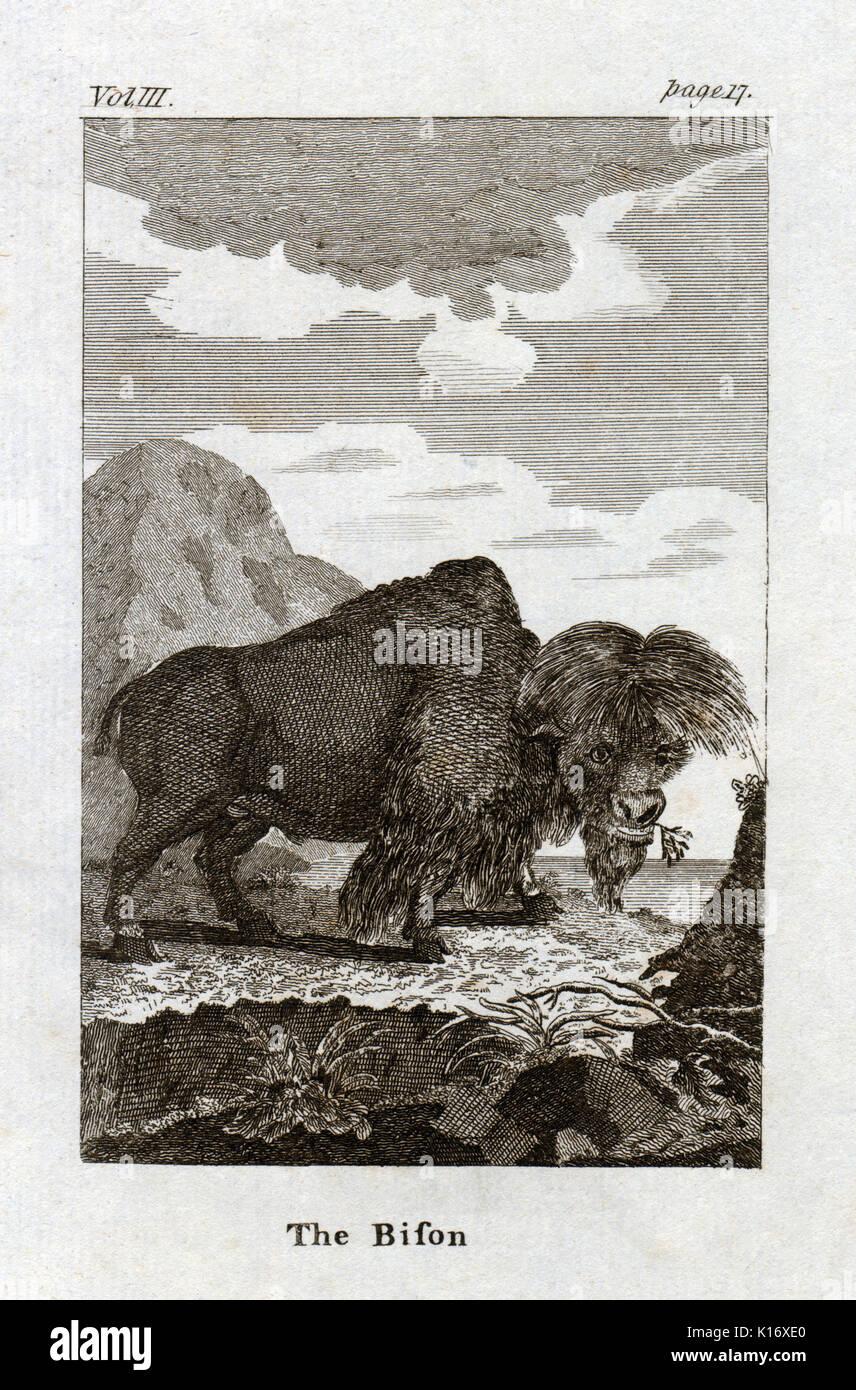 Antique animal print de un bisonte de Conde de Buffon's histoire naturelle, générale et particliere, c. 1780 Foto de stock