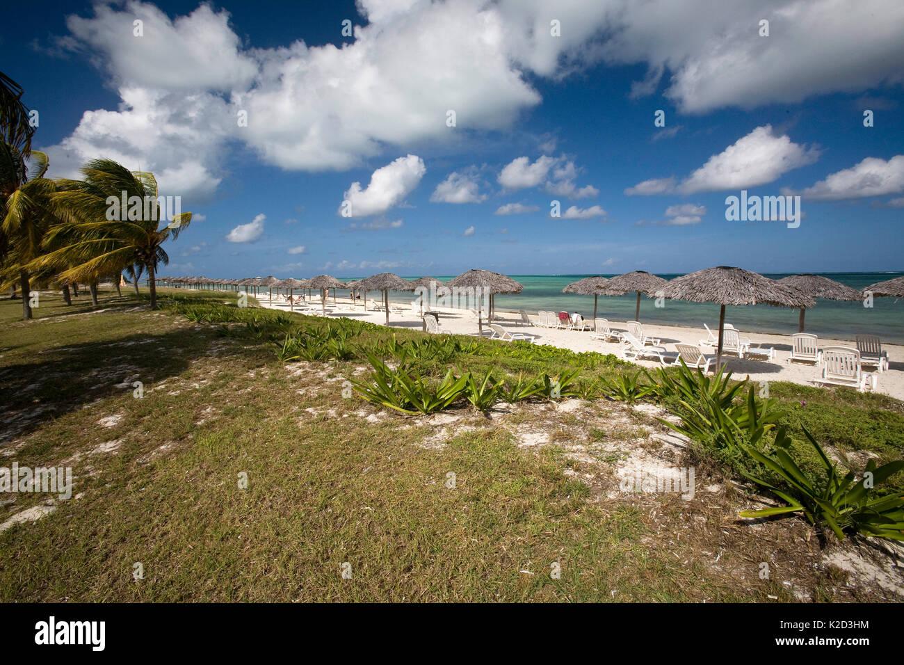 Playa de arena con palmeras en el Hotel Club Amigo Caracol, Santa Lucía, Camagüey, Cuba, Mar Caribe, Océano Atlántico Imagen De Stock