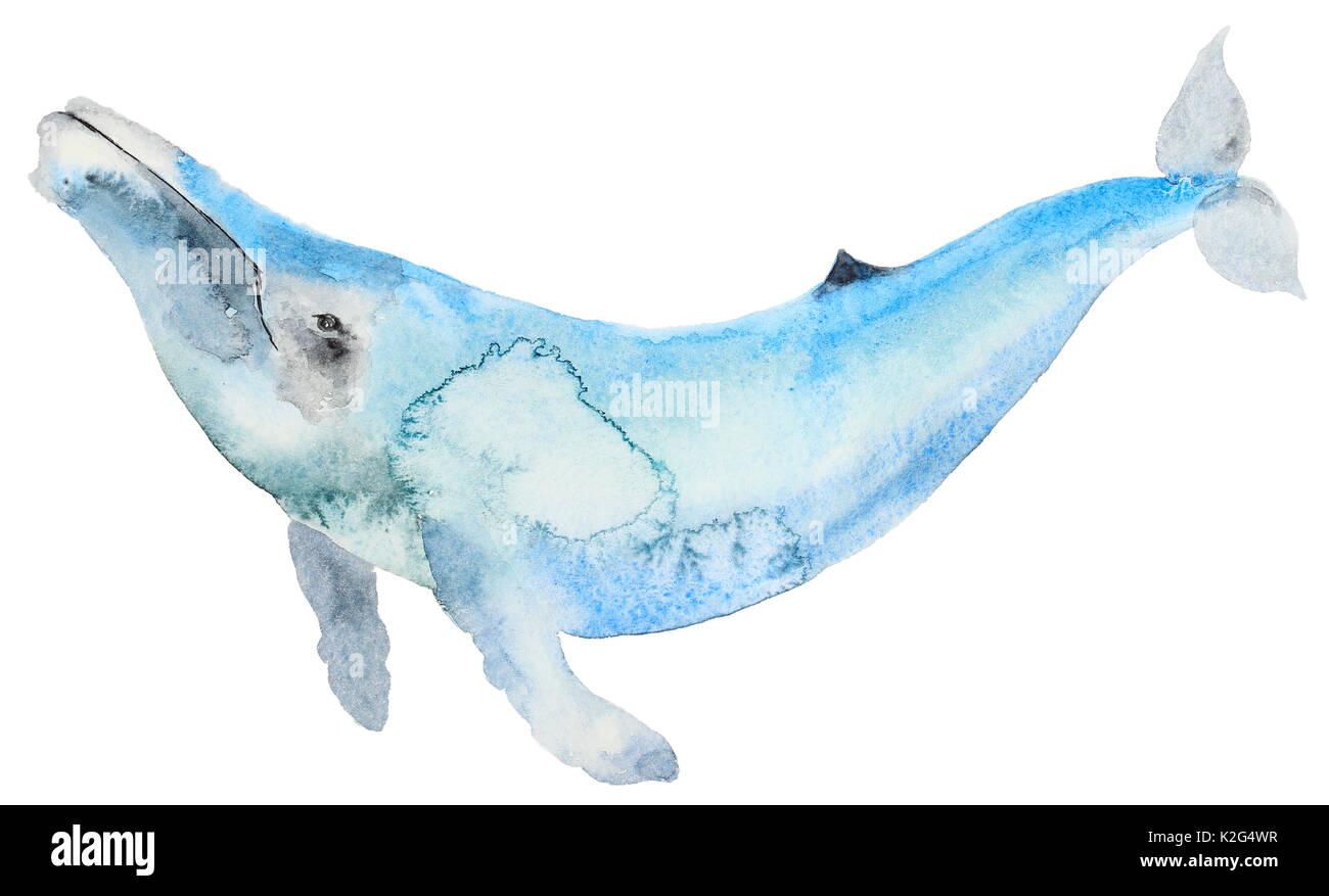 Killer Whale Cartoon Imágenes De Stock & Killer Whale Cartoon Fotos ...