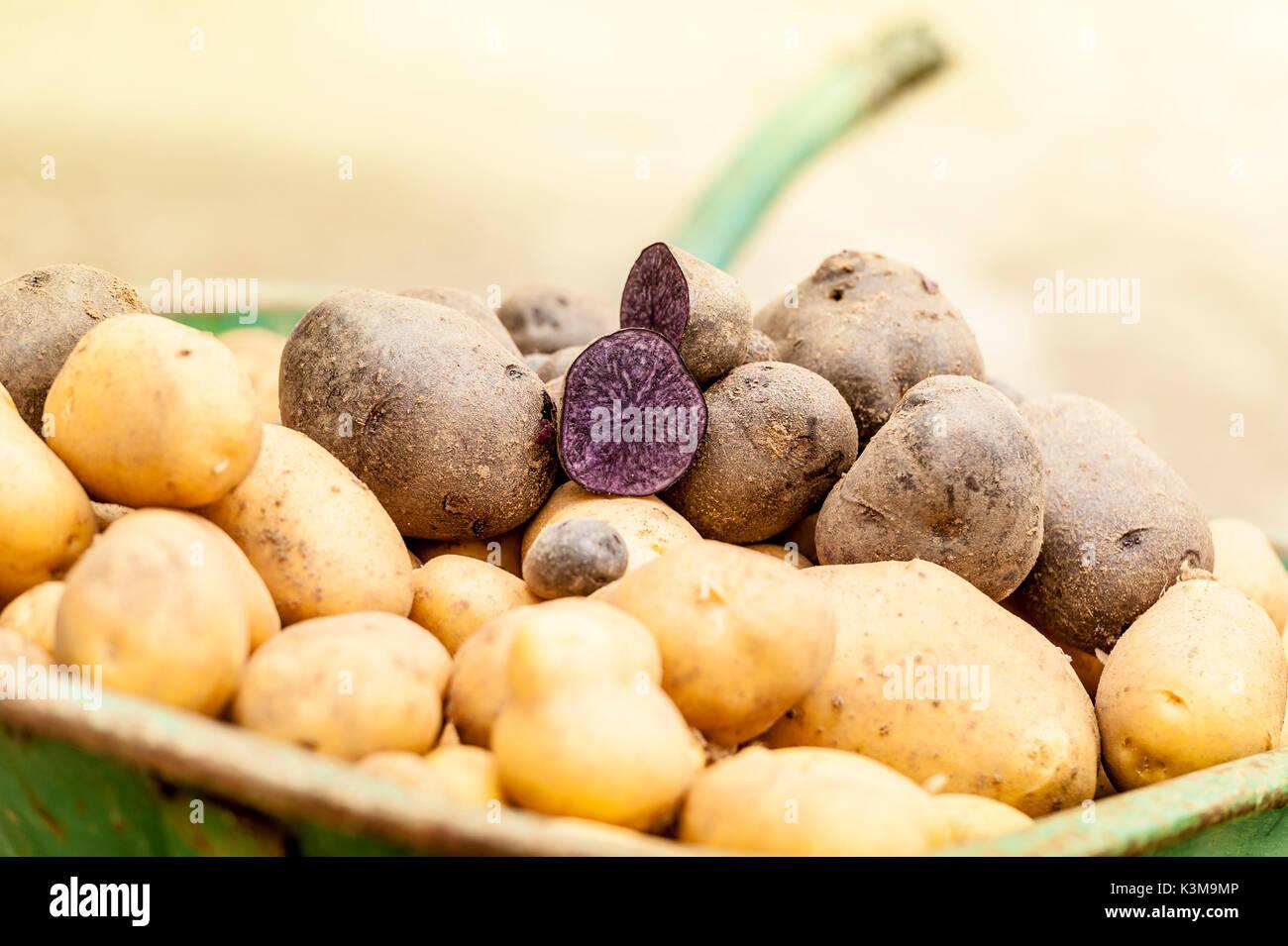 Patatas, hortalizas, cosecha, producir, granja Imagen De Stock