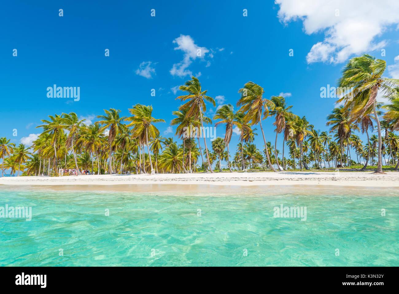 Canto de la playa, Isla Saona, East National Park (Parque Nacional del Este), en la República Dominicana, Mar Caribe. Imagen De Stock