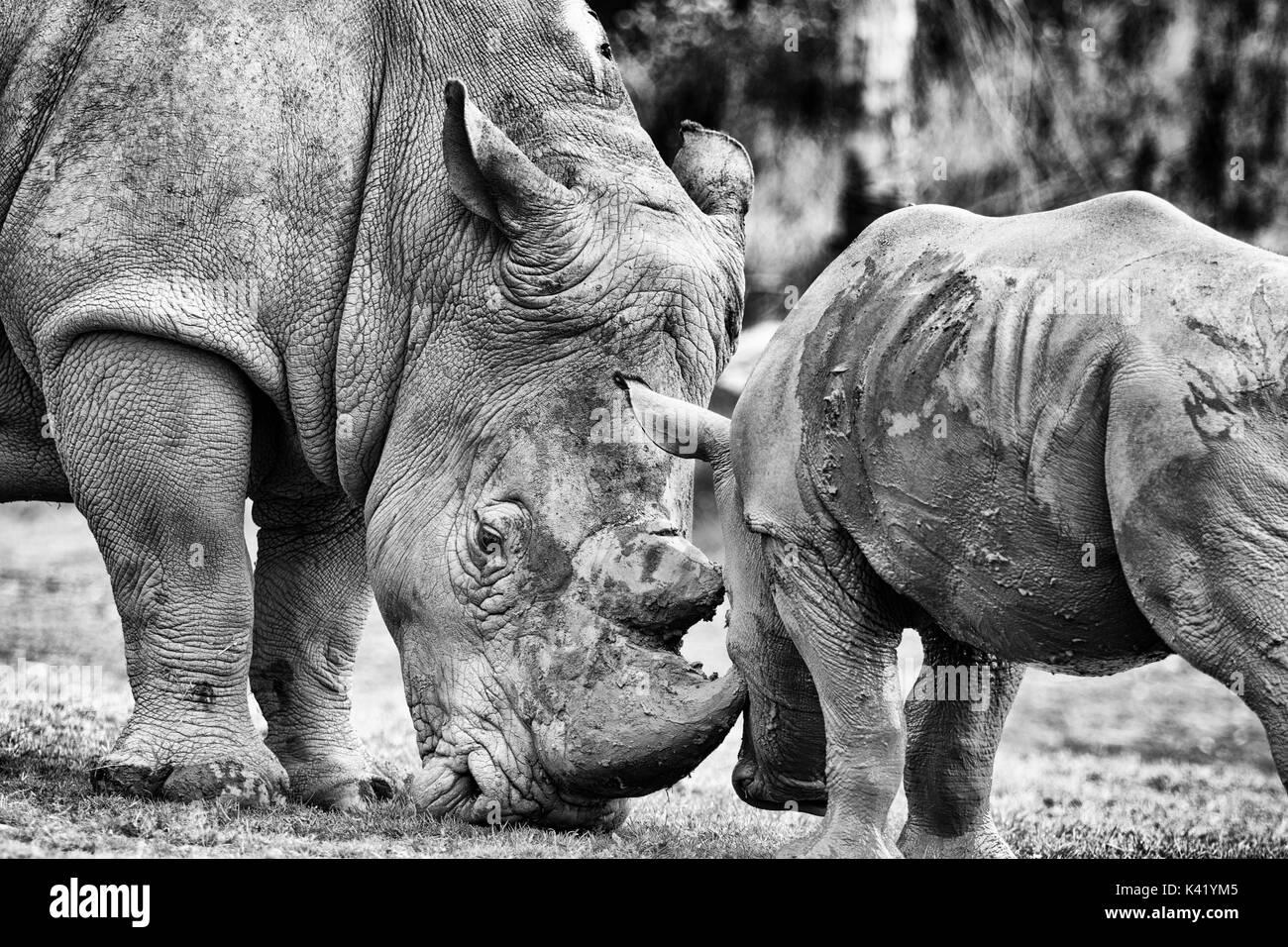 animales de zoológico Foto de stock