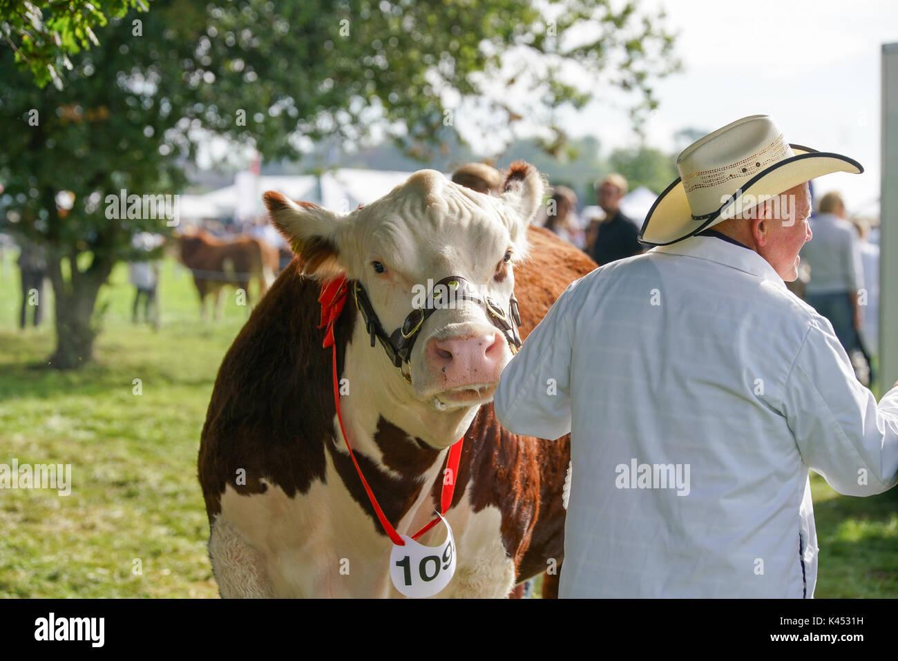 Los Bucks país muestran Imagen De Stock