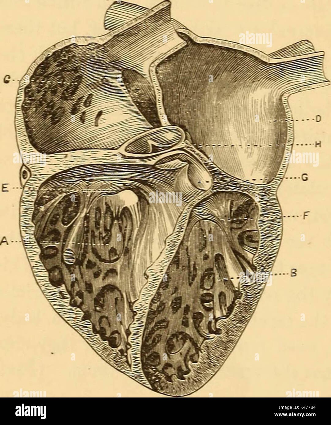 """""""Un tratado sobre la fisiología y la higiene para instituciones educativas y lectores en general .."""" (1887) Imagen De Stock"""
