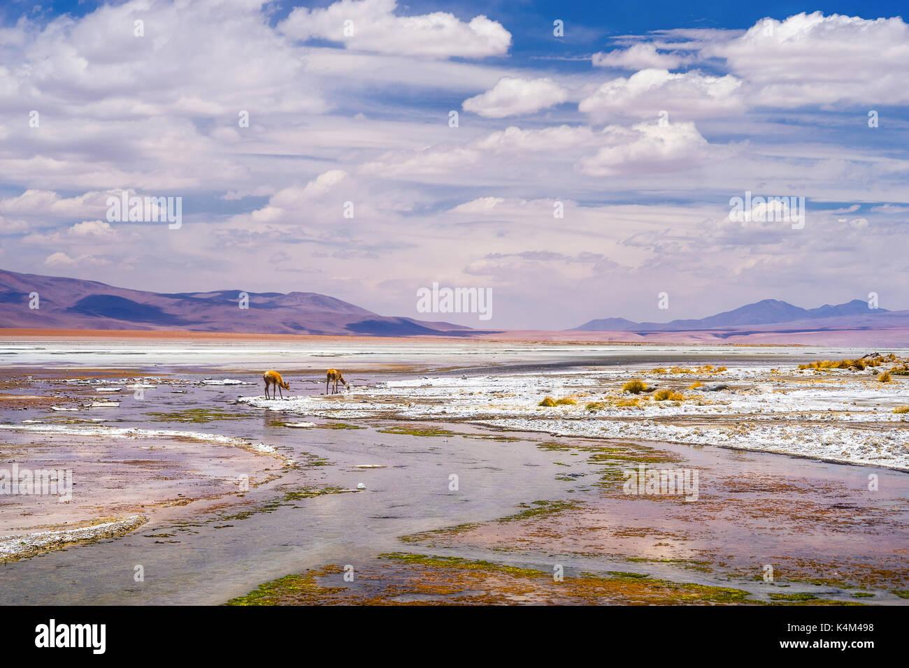 El salar de Uyuni es el salar más grande del mundo. Imagen De Stock