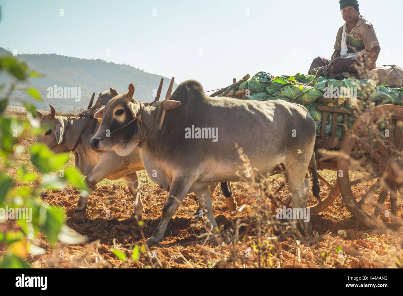 En el estado de Shan, Myanmar, 26 de diciembre de 2013. La vida real en las zonas rurales del estado de Shan, Myanmar, Birmania. Foto de stock