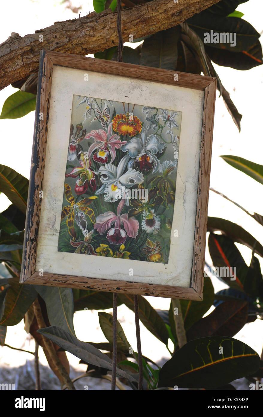Vintage enmarcado impresión botánico colgado de un árbol al aire ...