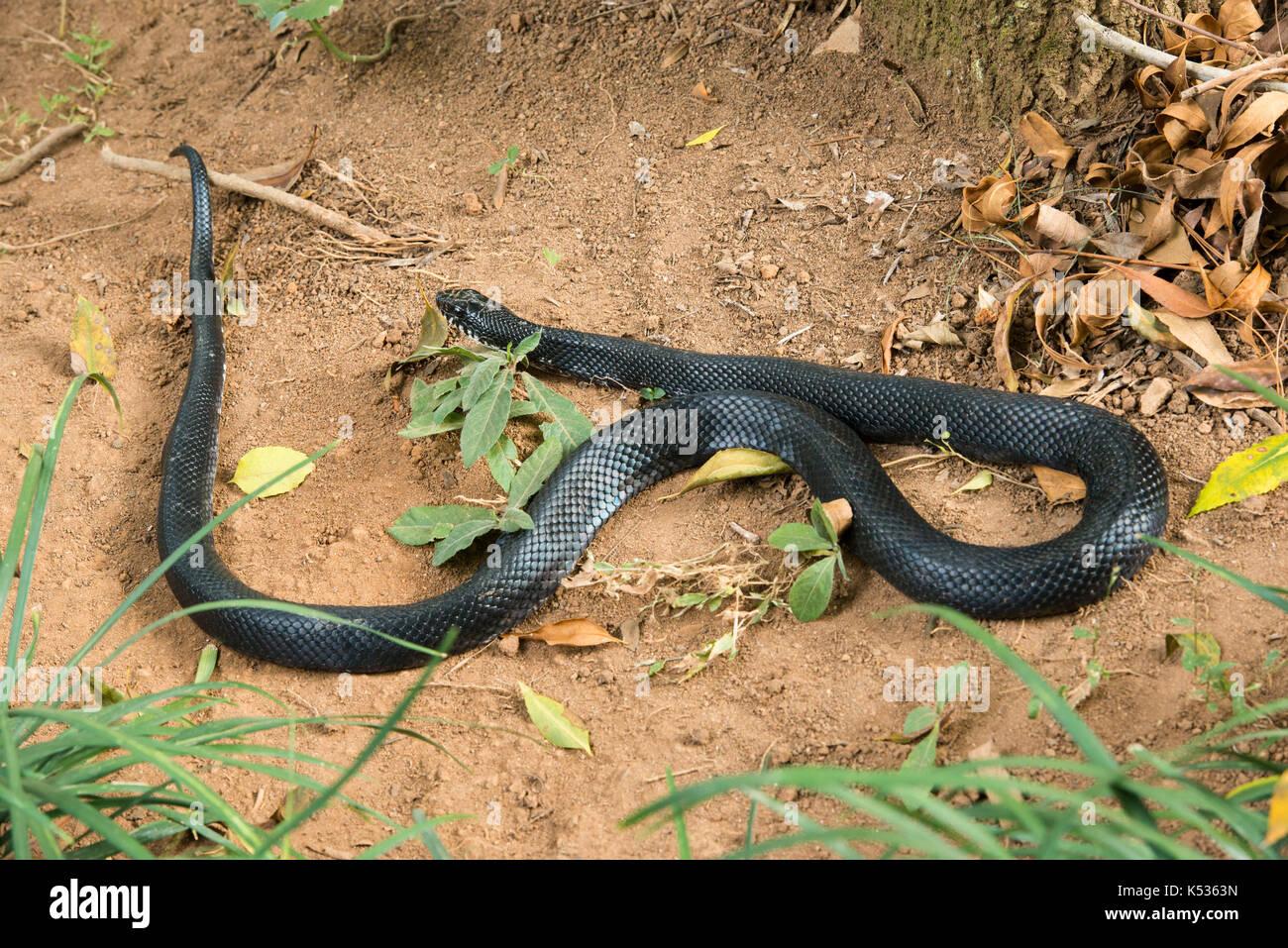 La serpiente, Croc granja, Antananarivo, Madagascar Imagen De Stock