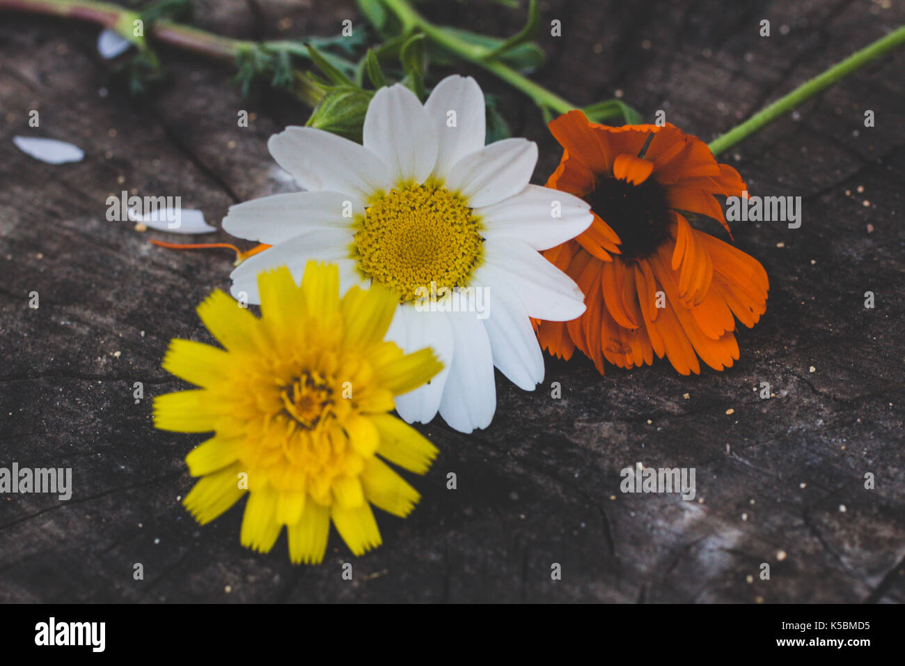 Flores De Colores Sobre Fondos De Madera Foto Imagen De Stock
