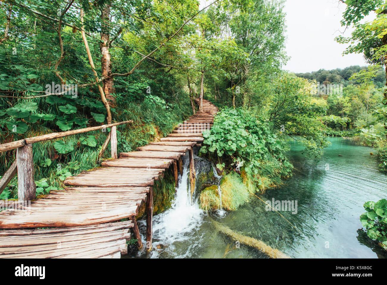 Hermosa cascada en verano verde bosque. Imagen De Stock