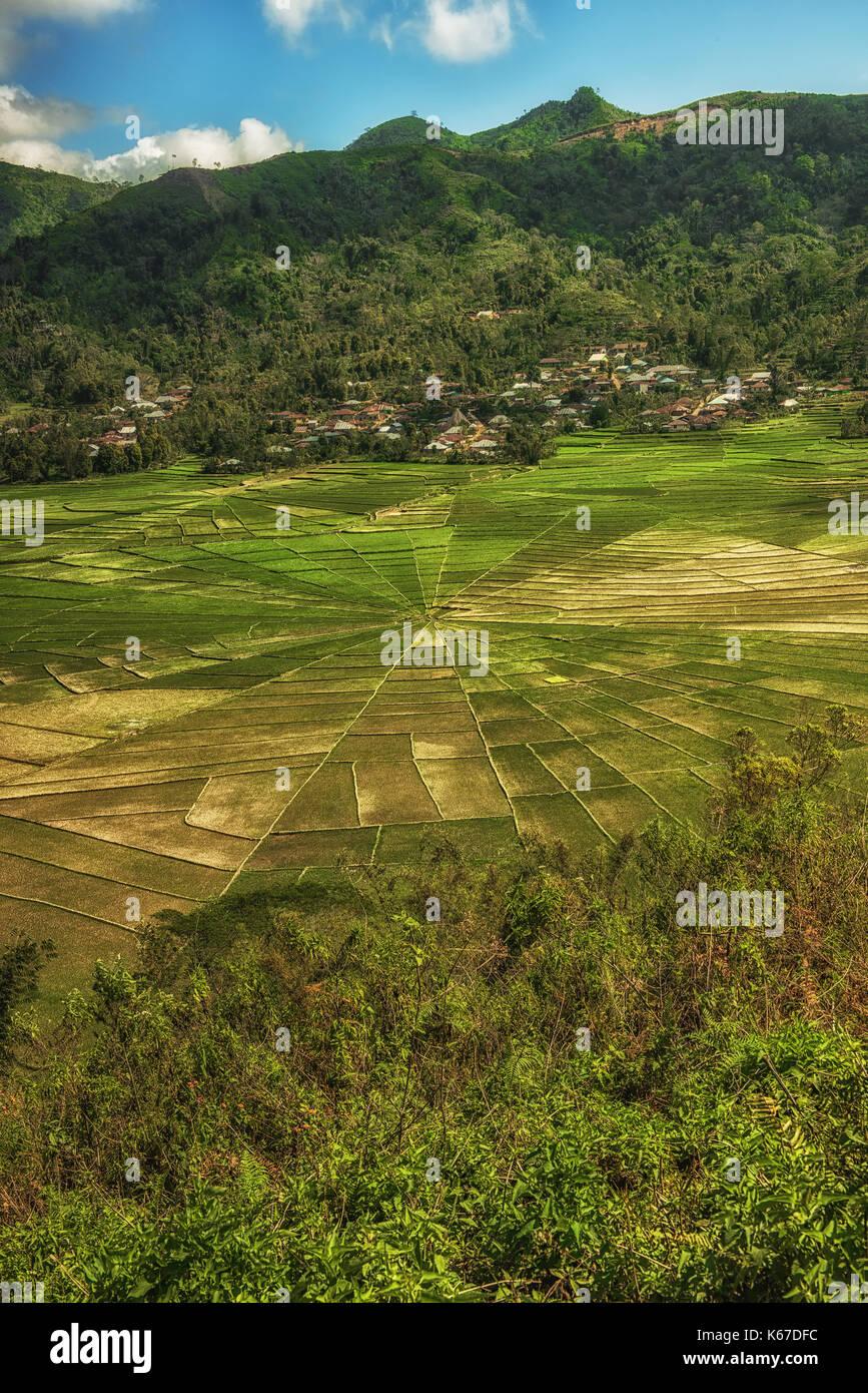 Tela de Araña lingko arrozales, cara village, cancar, East Nusa Tenggara, Indonesia Imagen De Stock