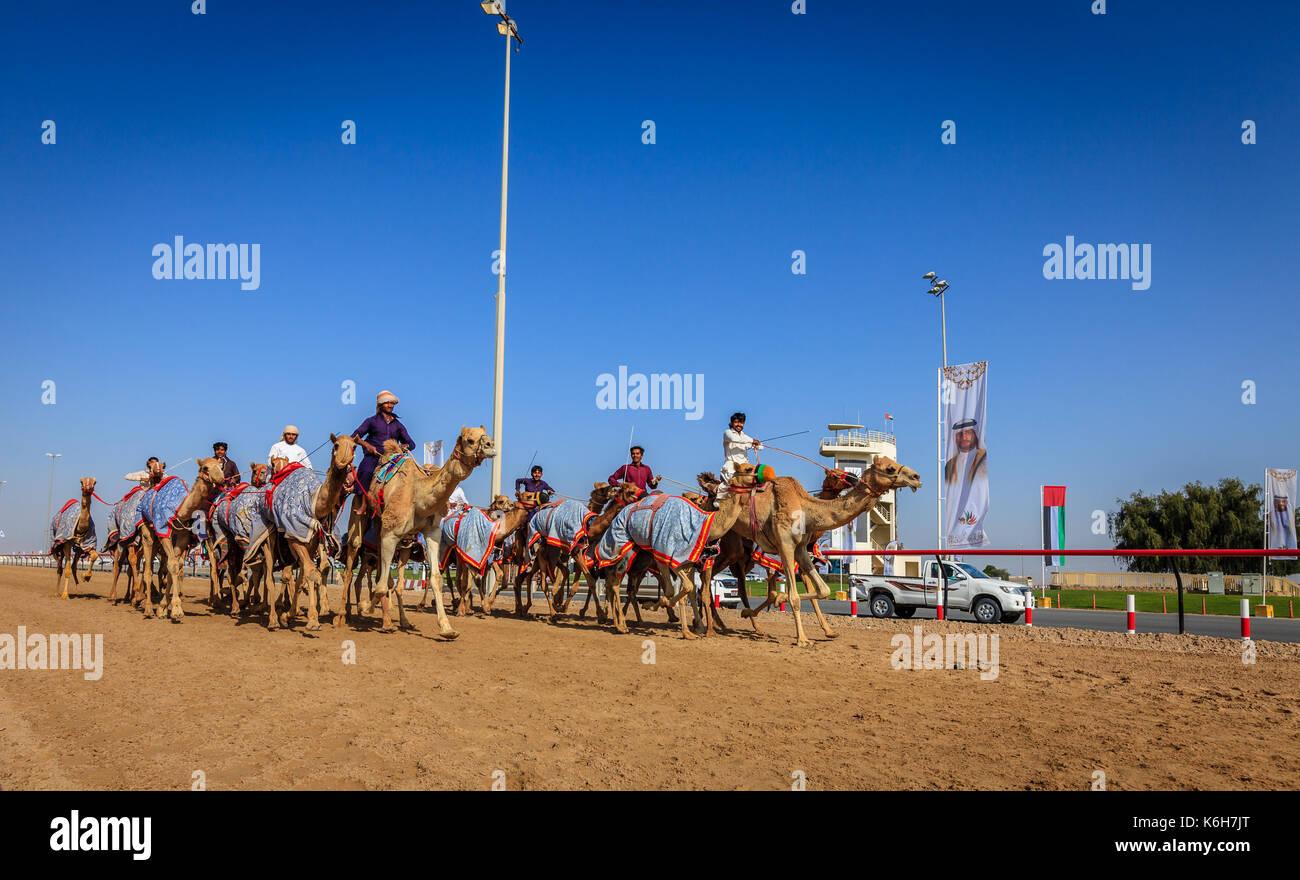 Dubai, Emiratos Árabes Unidos - marzo 25, 2016: La práctica de las carreras de camellos en Dubai, las carreras de Foto de stock