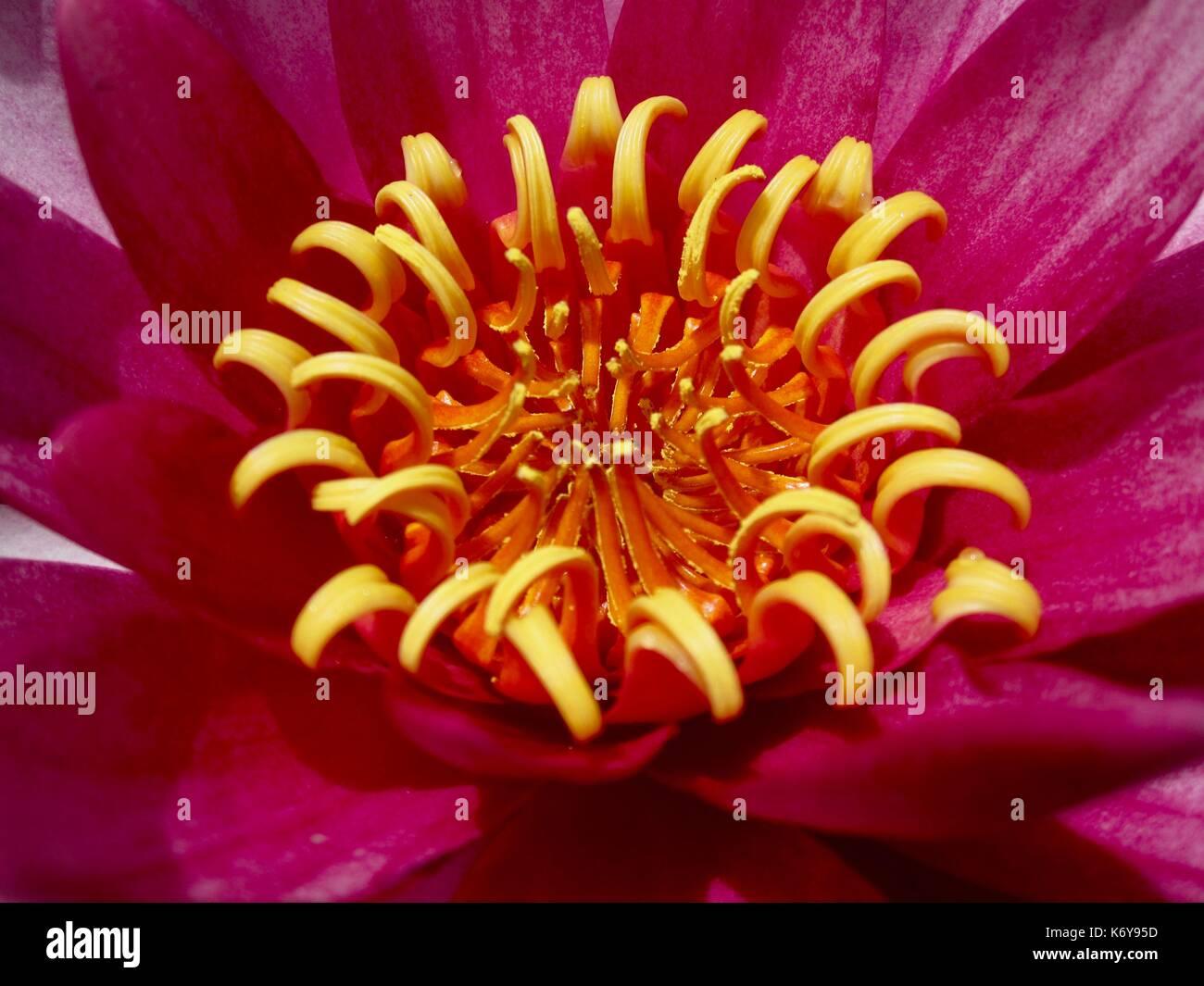 Flora portuguesa, flor, planta Foto de stock