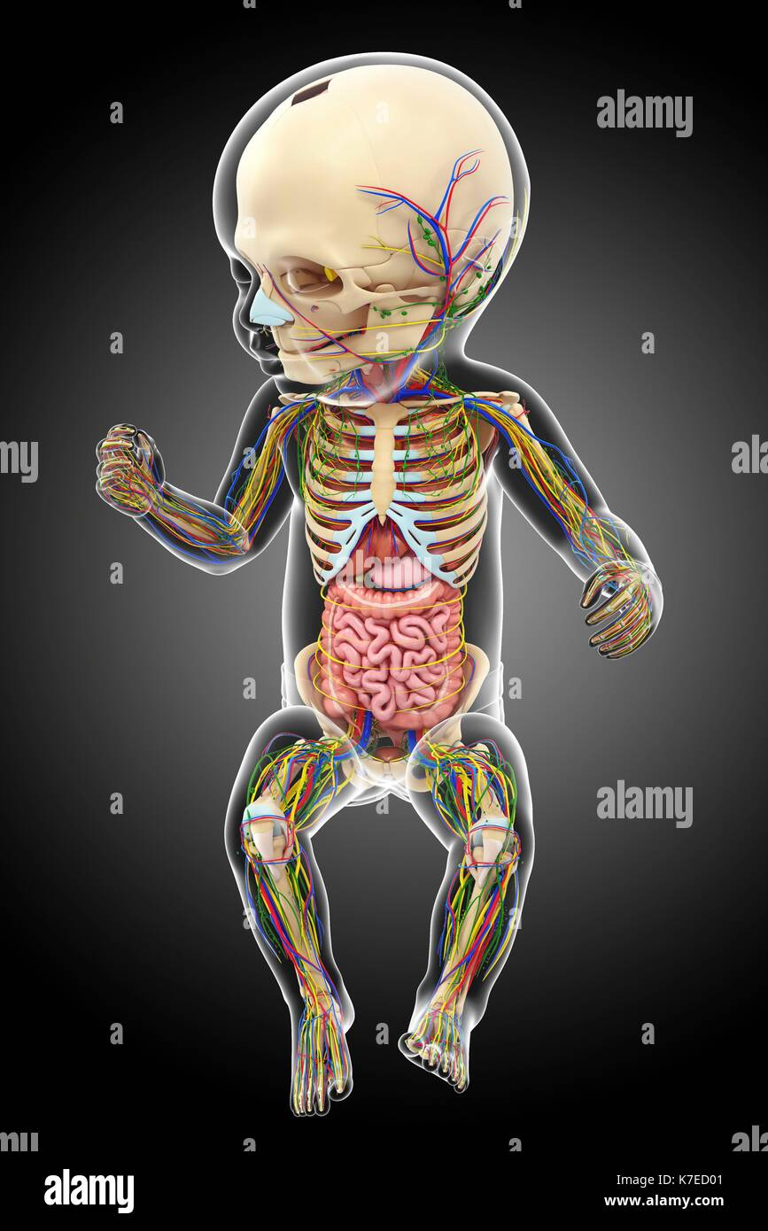 Babys Digestive System Imágenes De Stock & Babys Digestive System ...