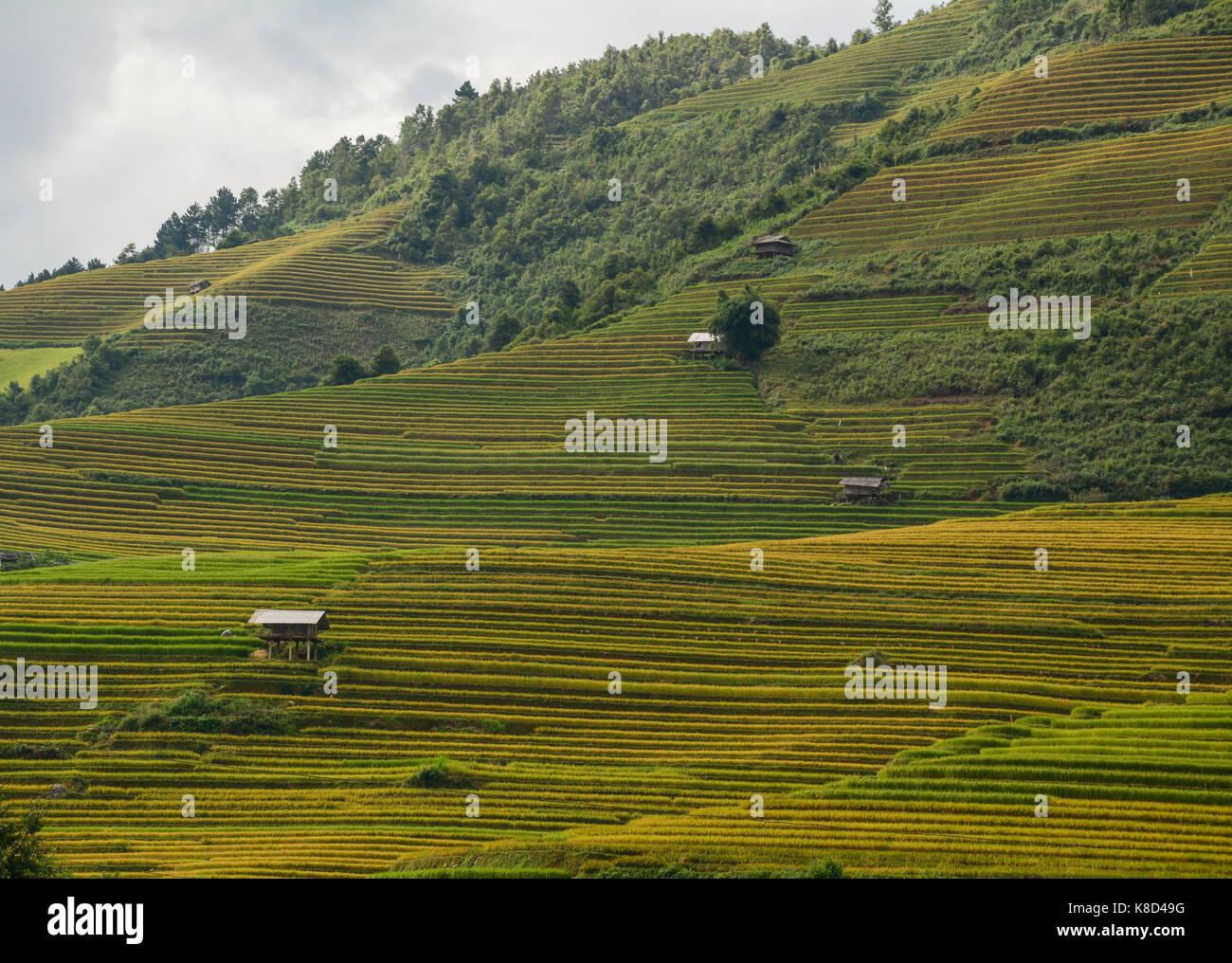 Paisaje De Terrazas De Arrozales En Sapa Vietnam Del Norte
