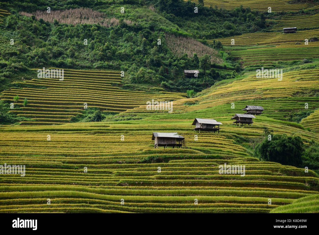 Pequeñas Casas Con Terrazas De Arrozales En Sapa Vietnam
